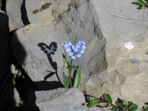 fleur en forme de cœur