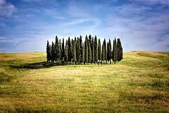 Cyprès en Toscane - http://www.flickr.com/photos/40579921@N00/4695769575