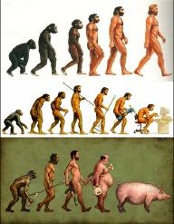 evolution de l'homme dans trois dessins humoristiques